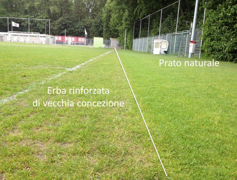 Poor growth conditions of an hybrid grass not suitable, compared to natural grass